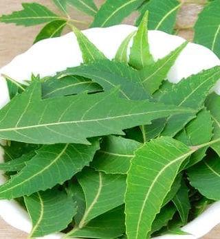 neem-leaves.jpg