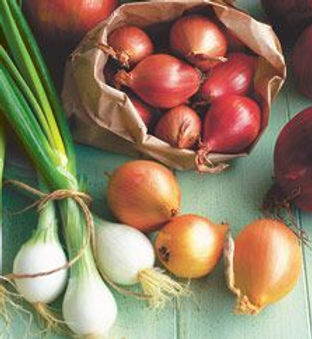 onions-47138-1.jpg
