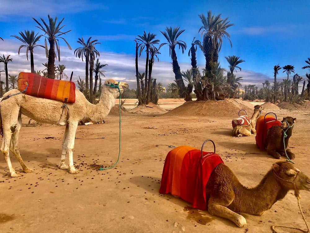 marrakech a