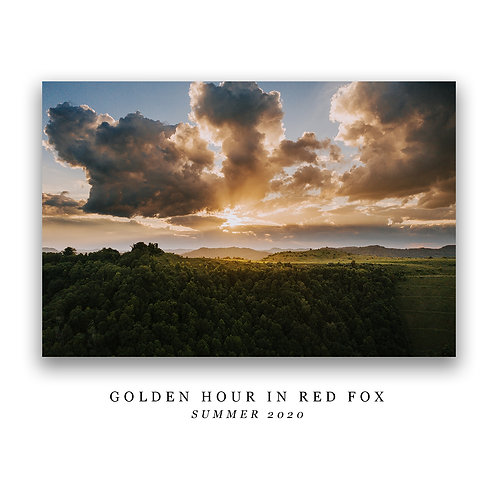 Golden Hour in Red Fox Print
