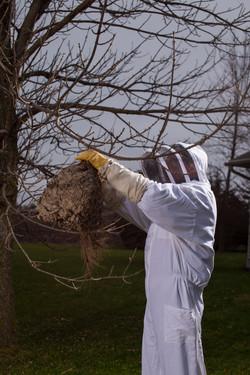 Eliminator Pest Management Co