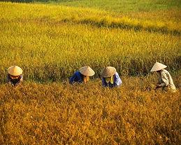 peoples vietnam.jpg