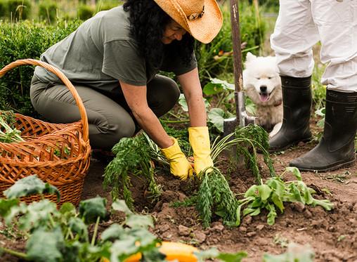 Bulletin de partage 4 - Locale, collective ou issue du jardin : des tendances qui s'affirment