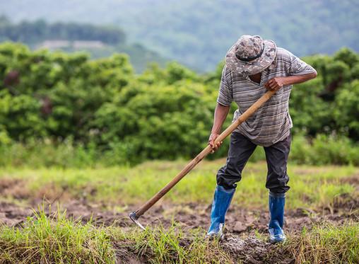 Bulletin de partage 4 - La situation des agriculteurs et des chaînes alimentaires