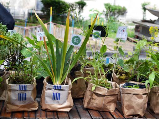 Éclairage Covid-19 | Les professionnels de l'agriculture urbaine face à la crise sanitaire