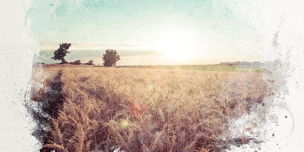 Agriculture et Anthropocène (et ce que nous dit la crise de covid-19)