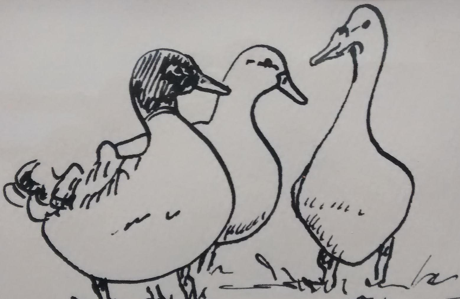 """""""Three Quacks"""""""