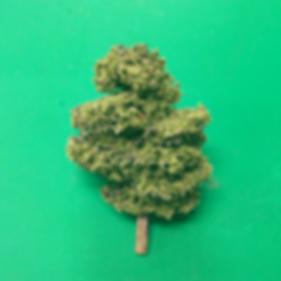 single tree.png