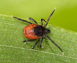 The Dangers Of Ticks During Fall