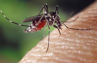 mosquito-1332382_1280.jpg