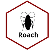 Roach.png