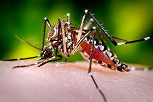 mosquito 2.jpg