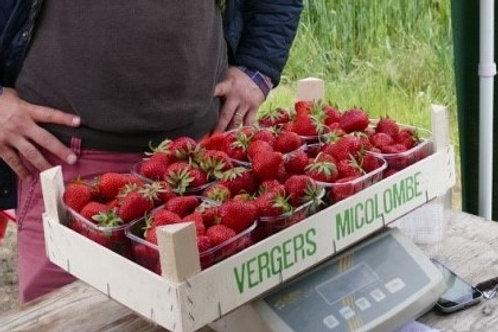 2kg fraises Lambada (du jour)