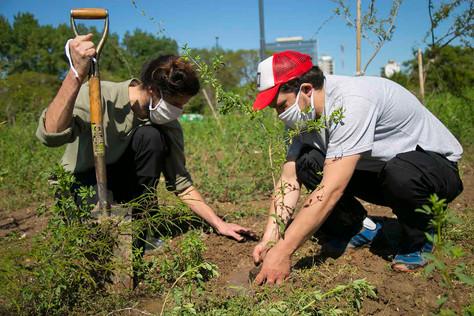 Continúa la forestación para ayudar a combatir el Cambio Climático