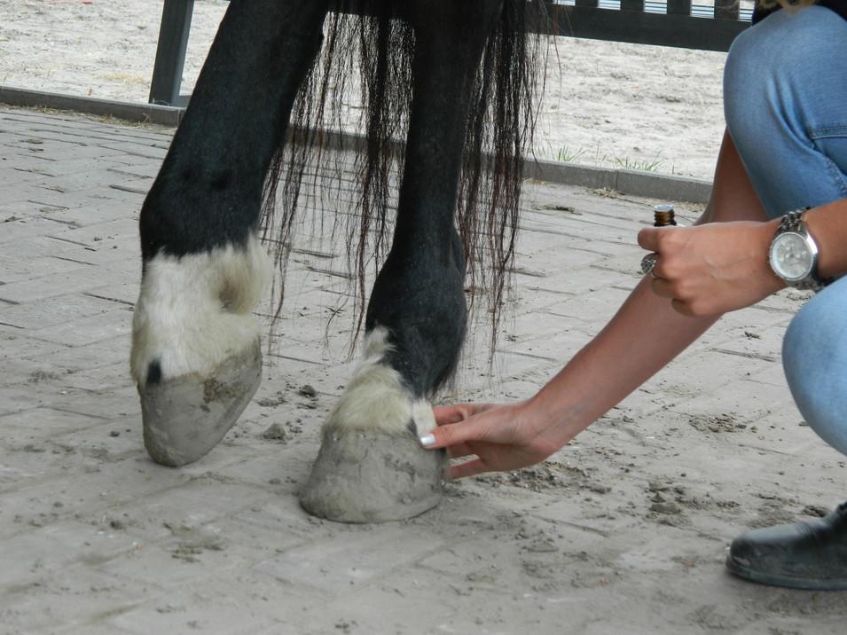 Behandeling paard