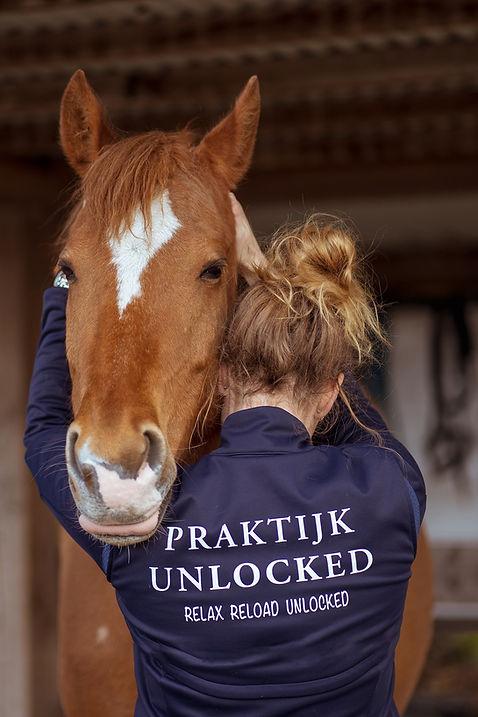 Acupressuur behandeling paard