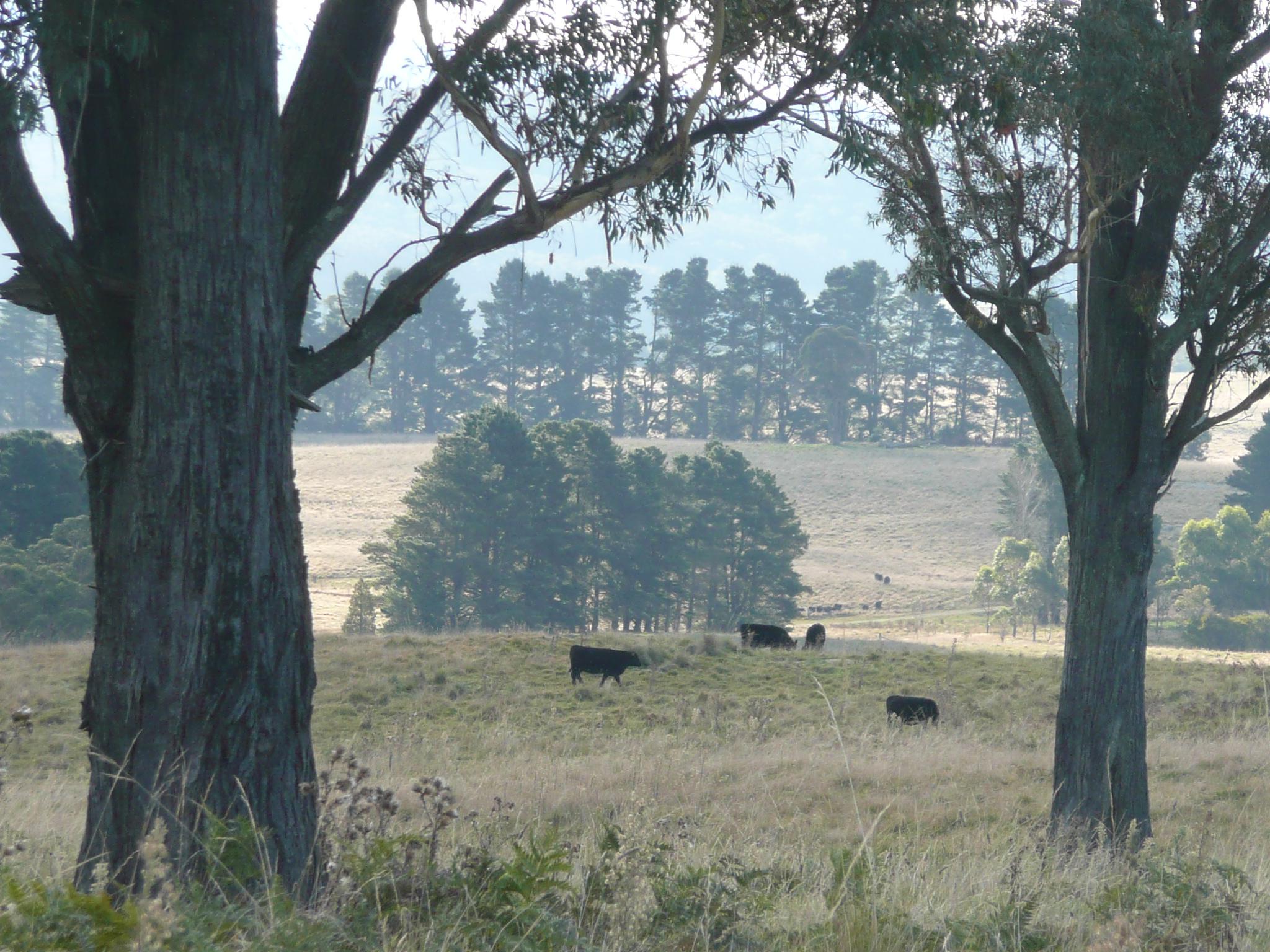 11 pasture