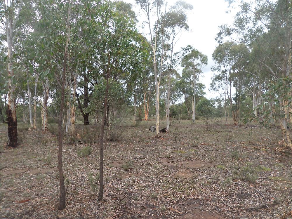 157 Fernleigh Cl - Australian bushland get-away