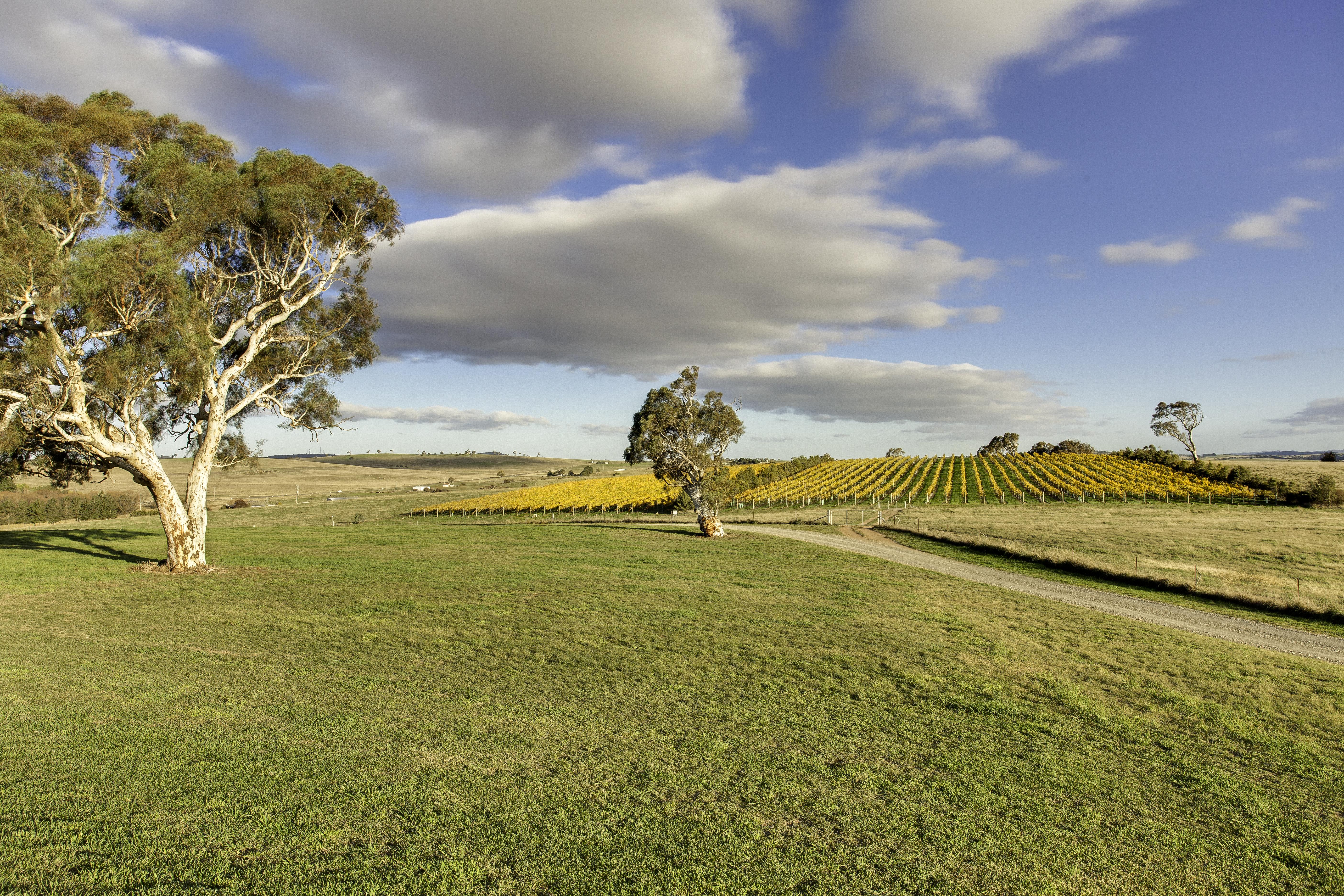 13 Autumn vineyard