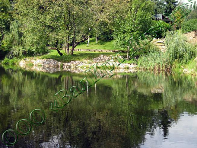 Озеленение и зарыбление водоемов