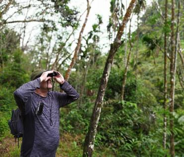 Will I see Orangutans?