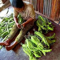 Preparing food for market