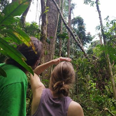 Exploring the jungle