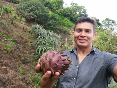 Meet Tonny and his amazing tropical fruits