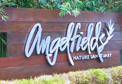 Angelfields.jpg