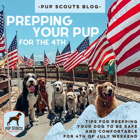 Prepping Your Pup For The 4th of July