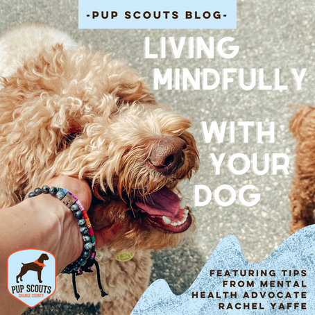 Living Mindfully With Your Dog