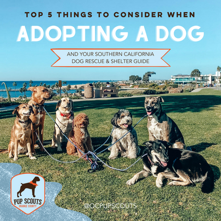 Top 5 Things to Consider When Adopting A Dog