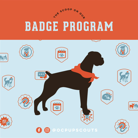 Welcome to Our OC Pup Scouts Blog