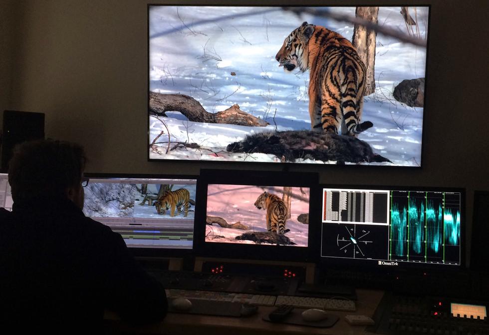 editing tigers.jpg