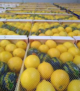 Agriocitricos Hermaons Gallego editado.j