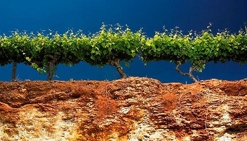 Coonawarra Soil