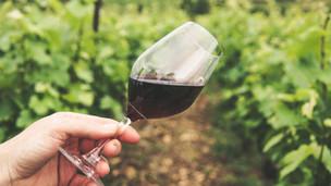 Coonawarra Vineyard Update And New Release Wines