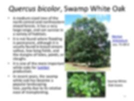 klehm-arboretum-trees-and-woody-plants-6