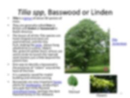 klehm-arboretum-trees-and-woody-plants-5