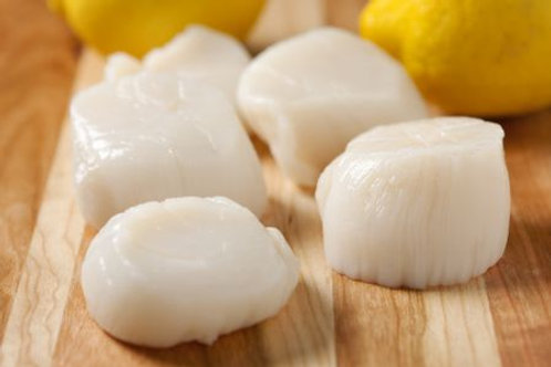 U.S. Scallop Meat (for Cooking)