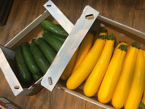 Holland Green Zucchini