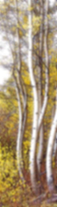 MarronBells-AspenTrees-1.jpg
