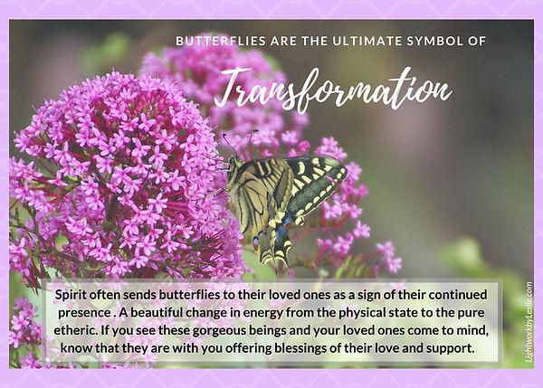 Butterfly Transformation.jpg
