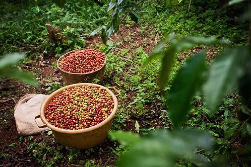 Rwanda Agraciro 1 Smallholder Blend - Per Kg