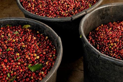 Costa Rica - SHB Palmichal Mircomill - Yellow Honey Villa Sarchi - Per Kg