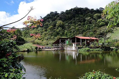 Nicaragua Hacienda Sajonia - Per Kg