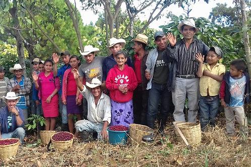 Honduras SHG - BioCafe FTO - Per Kg