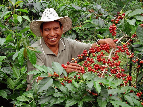 Guatemala Huehuetenango - Santa Rosa Estate - Per Kg