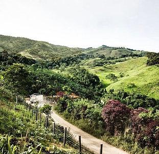Ecuador Bruhwer Farms Estate  - SCA 86 - Per Kg