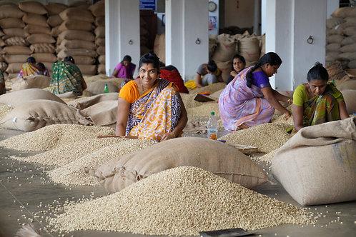 India Monsooned Malabar AA - Per Kg